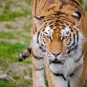 PSY1105: ANIMAL BEHAVIOUR AND EVOLUTION