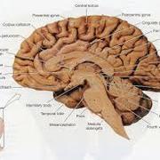 Y2 - Neuro