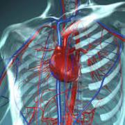 1.- Anatomia Clínica