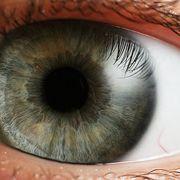 Ögats fysiologi och anatomi