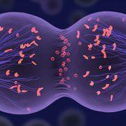 Life Sciences- Meiosis
