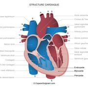 6 CARDIOMYOPATHIE hypertrophique