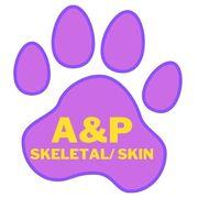AC: A&P: SKELETAL