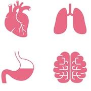 Anatomy (CAM101)