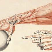 Aaron ANATOMY - MSK (Upper Limb)