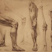 Nessy Anatomy MSK Lower Limb