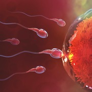 Life Sciences-Human Reproduction