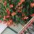 rosemary geib