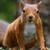 Squirrel Unknown