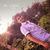 Rohith Raju