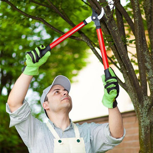 Tree pruning trimming