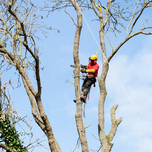 Tree cutting svc