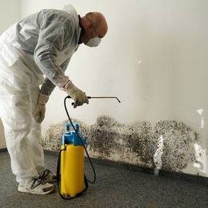Mold remedian