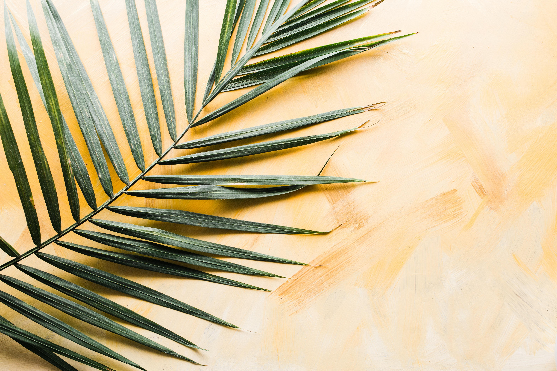 Palm sunday 2 original