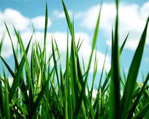 Grass-3-medium