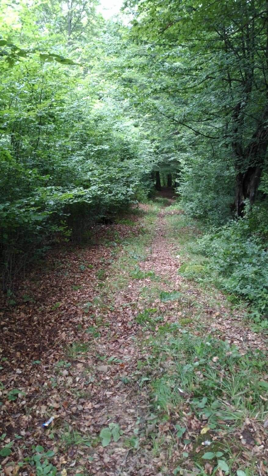 Trail%20through%20the%20forest original