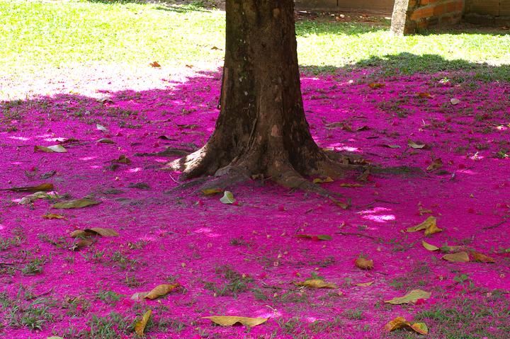 Fallen%20jumbo%20flowers%202-web