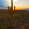 Saguaro%20np-thumb