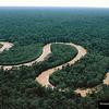 Rain%20forest%202-thumb