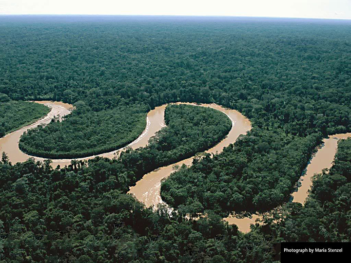 Rain%20forest%202-web