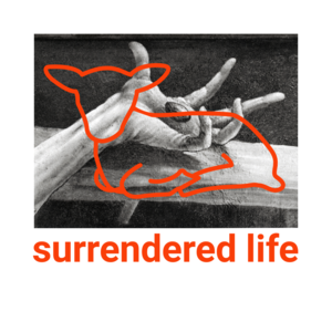 Surrendered-life-medium