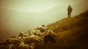 Background-shepherd-sheep-medium