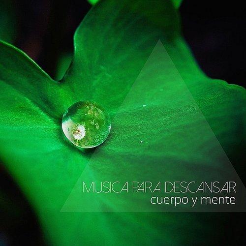 Musica Relajante Specialistas Música Para Descansar Cuerpo Y Mente Musica Instrumental Para Relajarse Y Sonidos Relajantes Para Dormir Daddykool