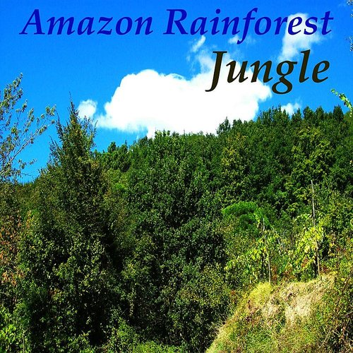 Jungle - Amazon Rainforest - SIngle