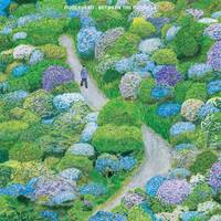 Fiddlehead - Between The Richness [Limited Edition White & Purple LP]