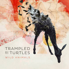 Trampled By Turtles Pre-order Promotion