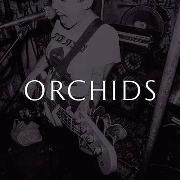 Orchids - Single