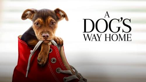 A Dog's Way Home [Movie]