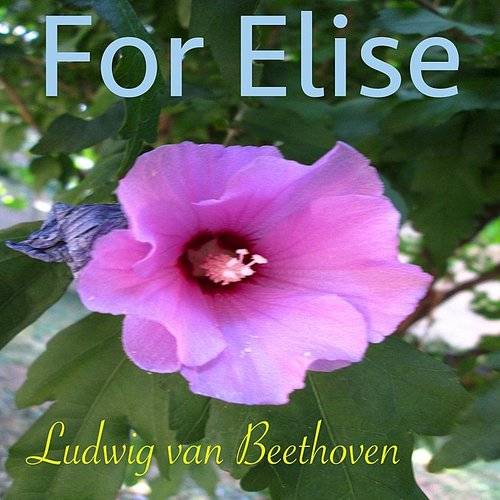 Beethoven: For Elise, Woo 59 (Nature Sounds Piano Version)