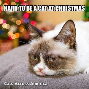 Hard To Be A Cat At Christmas (Full Grumpy Version)