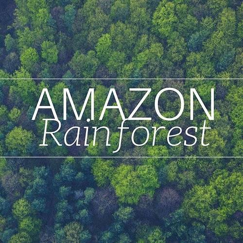 Background Music Club - 2018 Amazon Rainforest - The Bery Best In