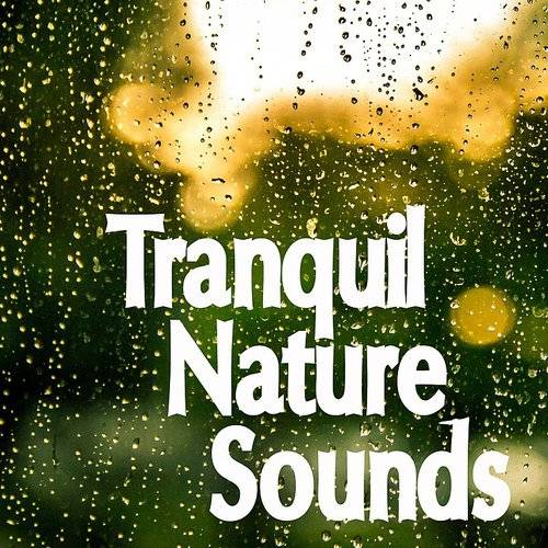 20 Tracks Of Tranquil Nature And Relaxing Rain Sounds