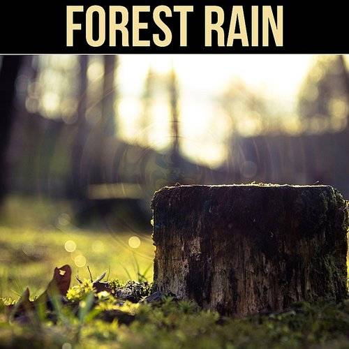 Nature Sounds Collective - Forest Rain - Soft Falling Rain, Relaxing
