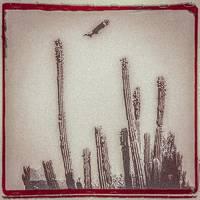 Alejandro Escovedo - La Cruzada [Bone White 2LP]