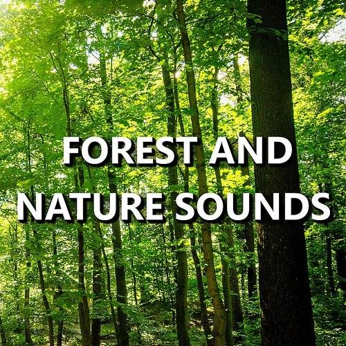 Forest and Nature Sounds - Forest And Nature Sounds | Down In The