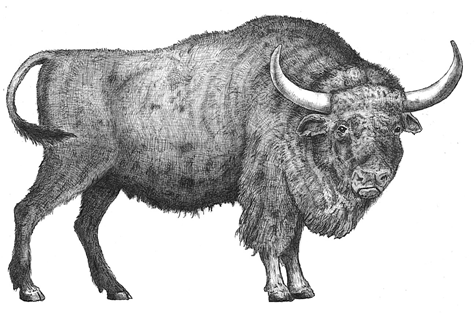 bison praxus small.png