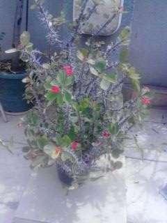 plante pt gradina