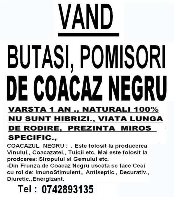 Vand Pomisori,Butasi De Coacaz Negru.