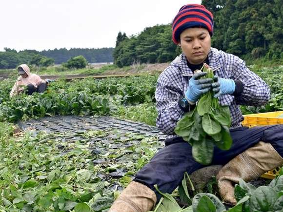 Aducem Muncitori Din Asia Pentru Toate Domeniile