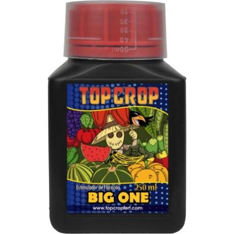 Top Crop - Big One