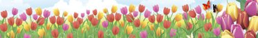 Tulips to Browse With