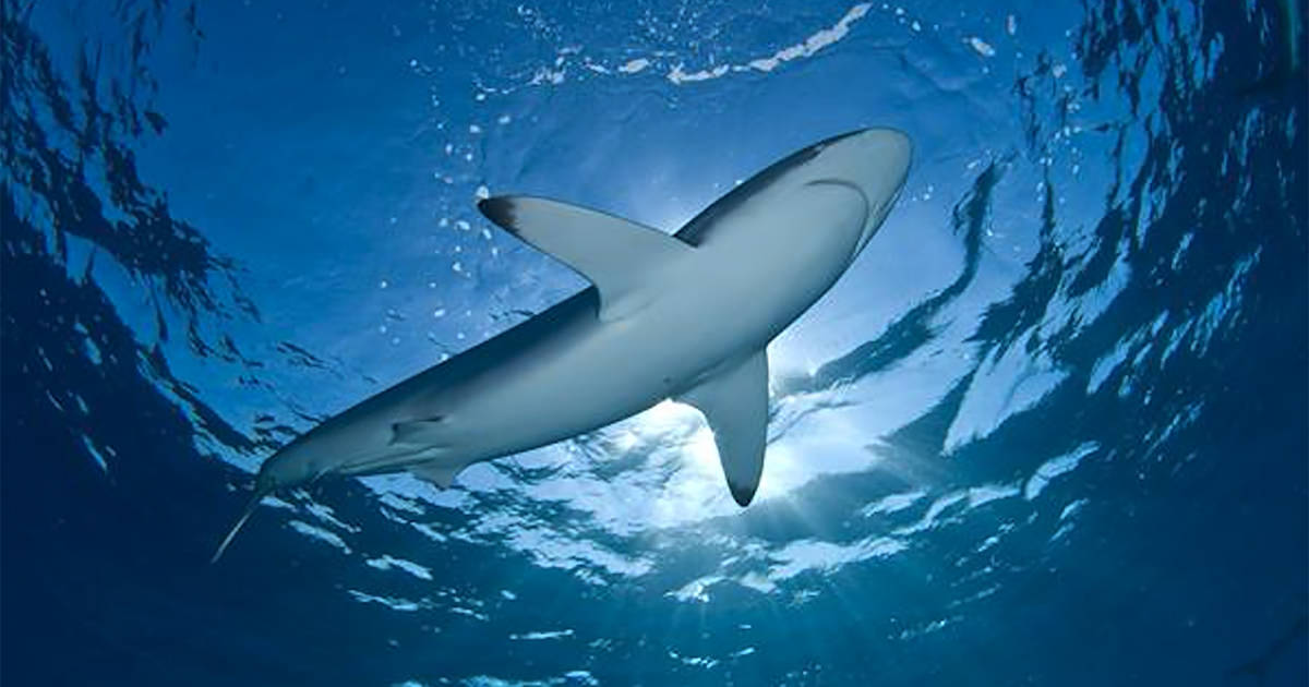 Canada just banned the import and export of shark fins
