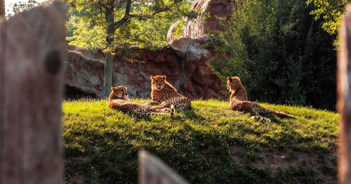 The Toronto Zoo is cutting admission prices almost in half this week