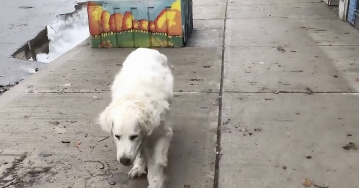 People are heartbroken over the video of this Toronto dog's final walk