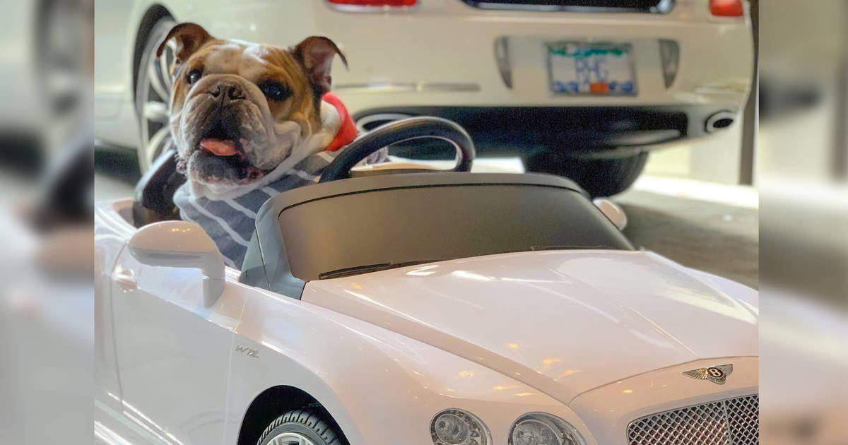 Celebrity dog in remote-controlled car graces Toronto auto show