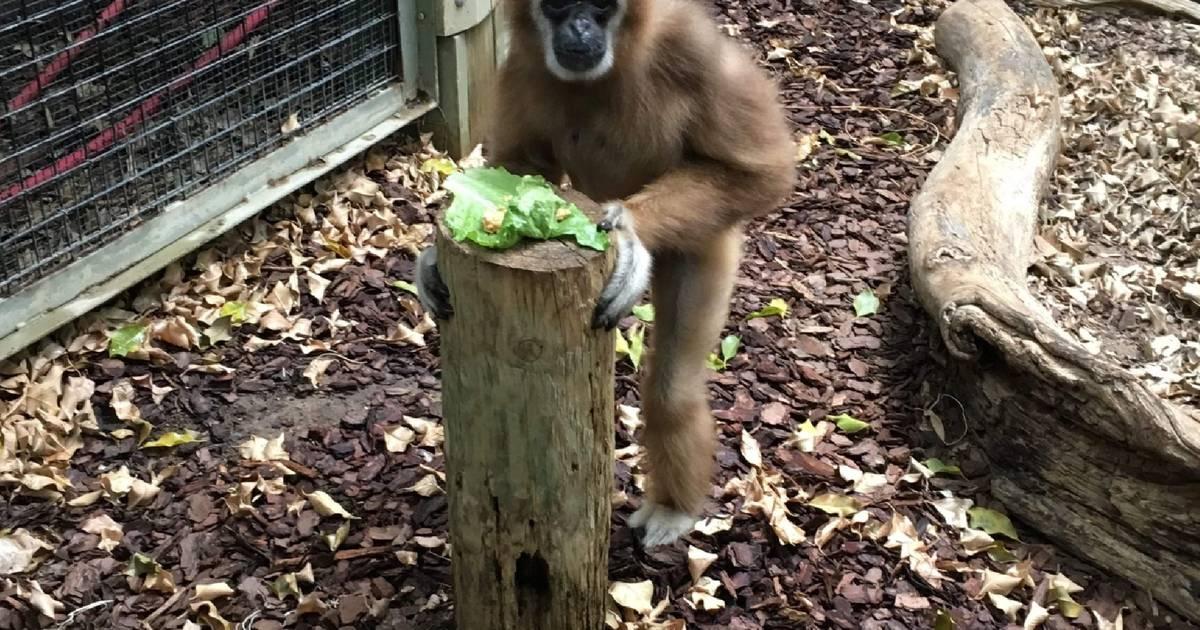 トロント動物園は、封鎖されている間、動物に餌をやるのに経済的支援が必要